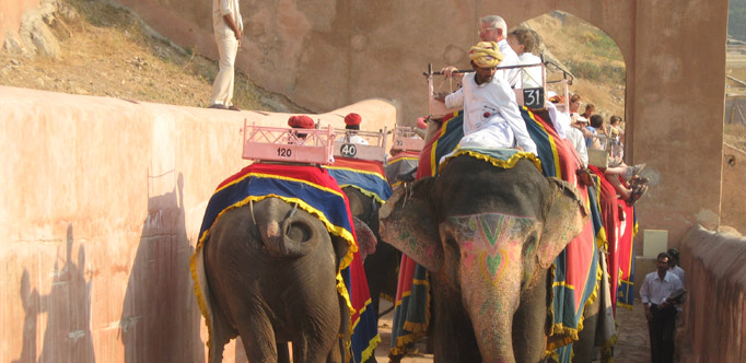 Elephant ride in Jaipur with Tour Guide & Driver