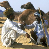 Camel ride in the dunes of Sam