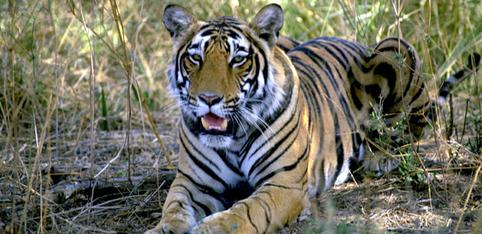Wildlife tour in Ranthambore National Park