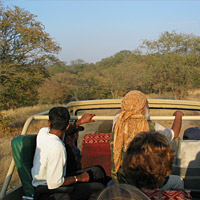 Ranthambore National Park Wildlife Safari